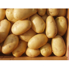 New Fresh Golden Potato